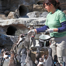Zoo Adventures: A Zookeeper's Life for Me