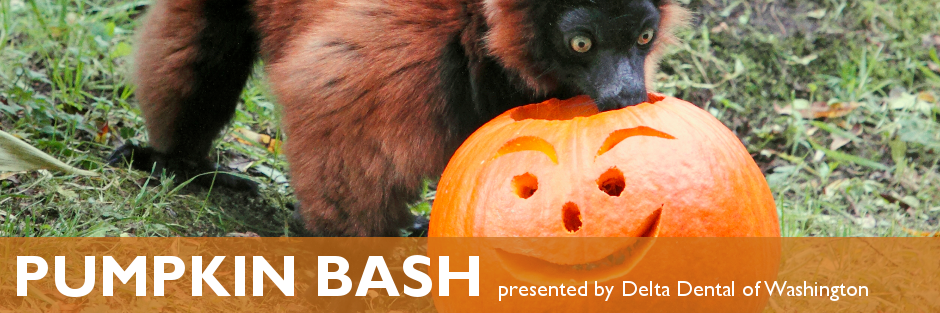 Pumpkin Bash Halloween at Woodland Park Zoo