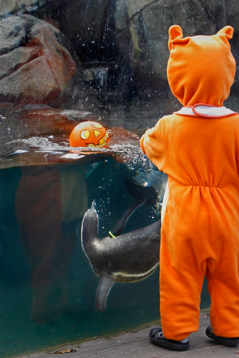 Pumpkin Bash at Woodland Park Zoo