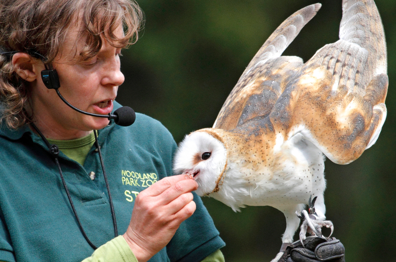 internships  externships and job shadowing at the zoo