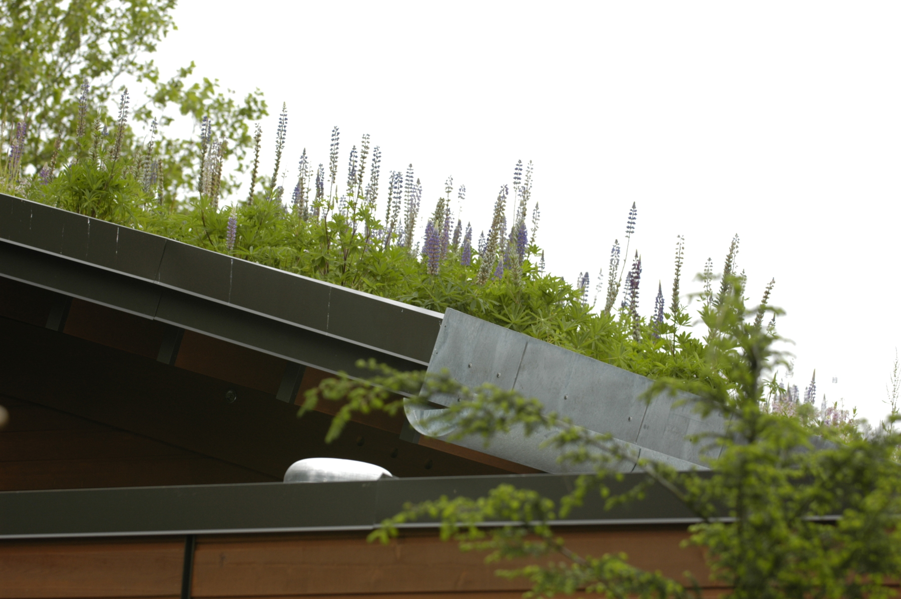 Zoomazium roof -2